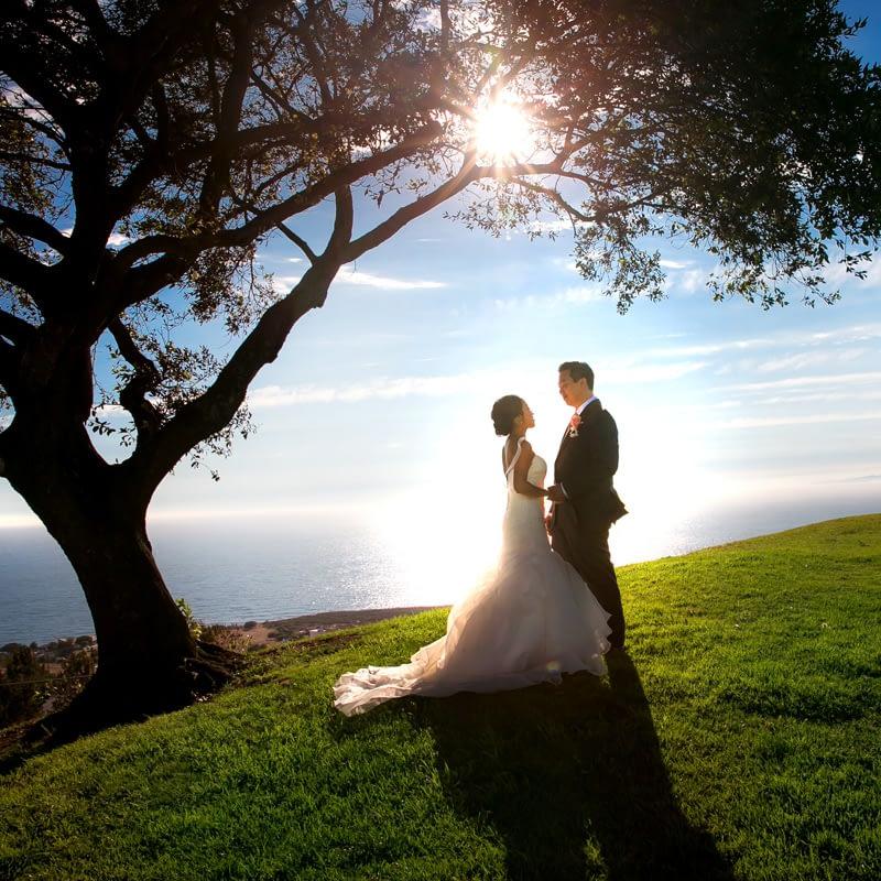 wedding photo bride groom sunset park tree ocean
